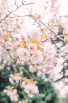 Tranquil Blossom b