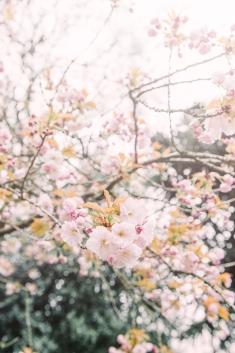 Tranquil Blossom c