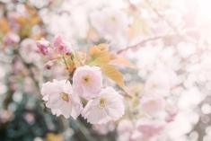 Tranquil Blossom